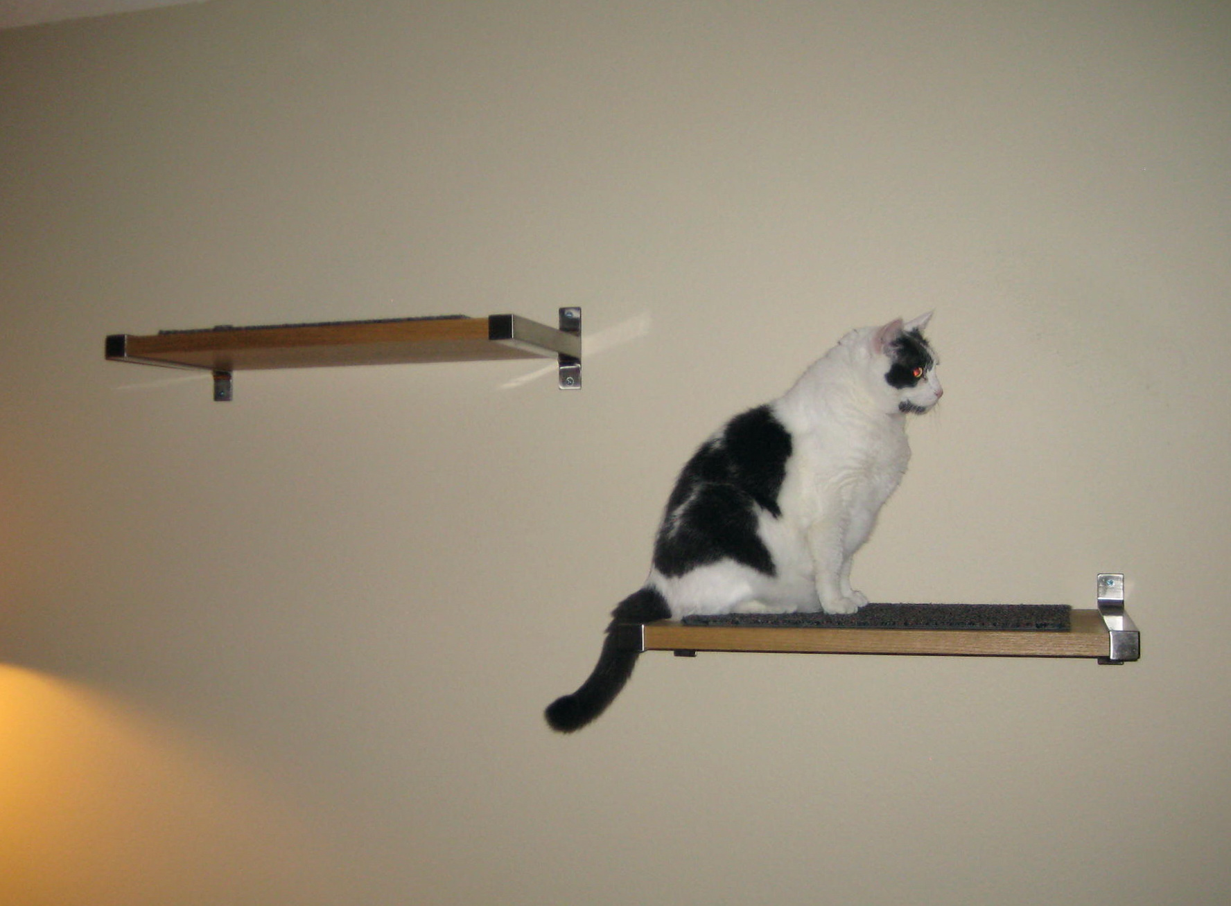 Cat Shelves For Walls Diy