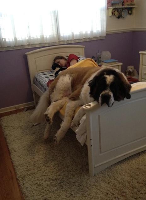 Large Dog Beds Amazon