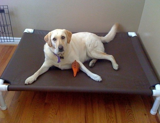 Chew Proof Dog Bed Lifetime Guarantee