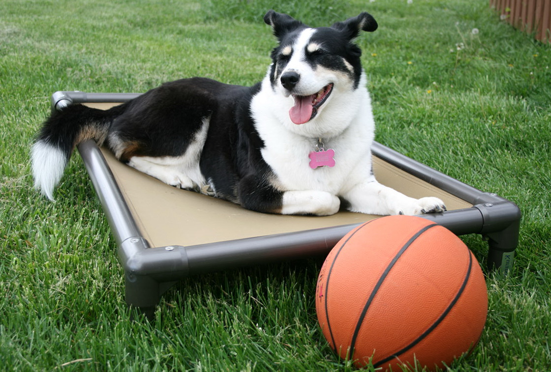 Indestructible Dog Bed Kuranda