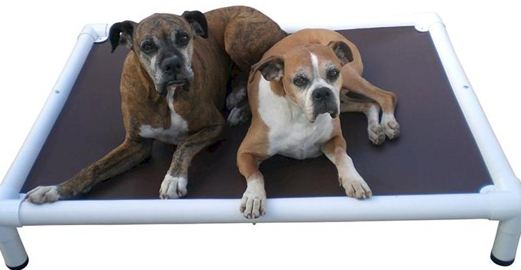 Indestructible Dog Beds For Pitbulls