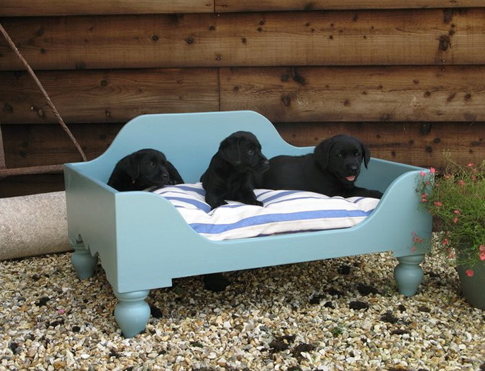 Raised Dog Bed For Large Dogs