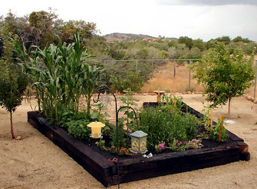 Raised Garden Beds In Arizona