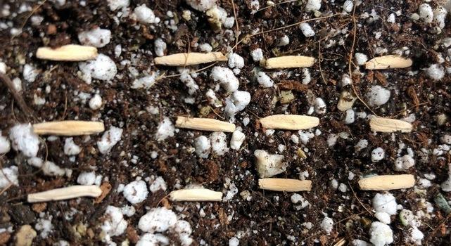 Aproximadamente para que puedas descomponer las semillas en la superficie del suelo