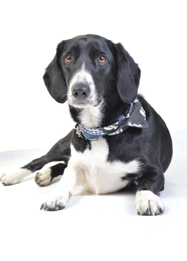 Pet Portraits Derby Professional Amp Affordable Studio