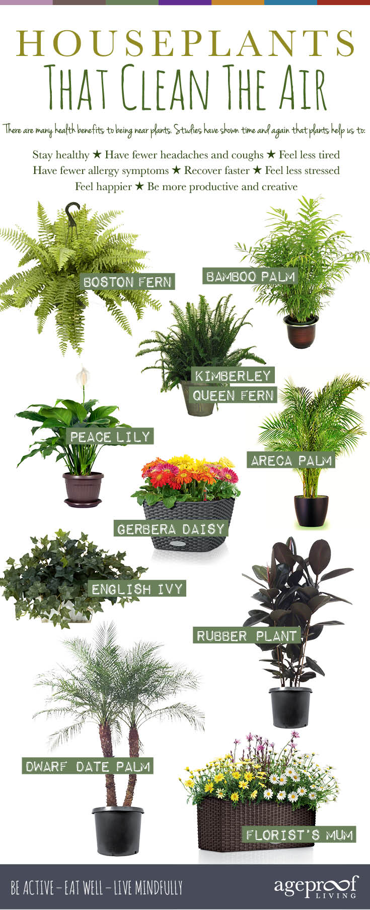 Plants Good Indoors