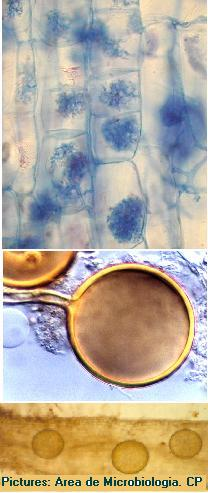 Applications of Arbuscular Mycorrhizal Fungi to Horticulture