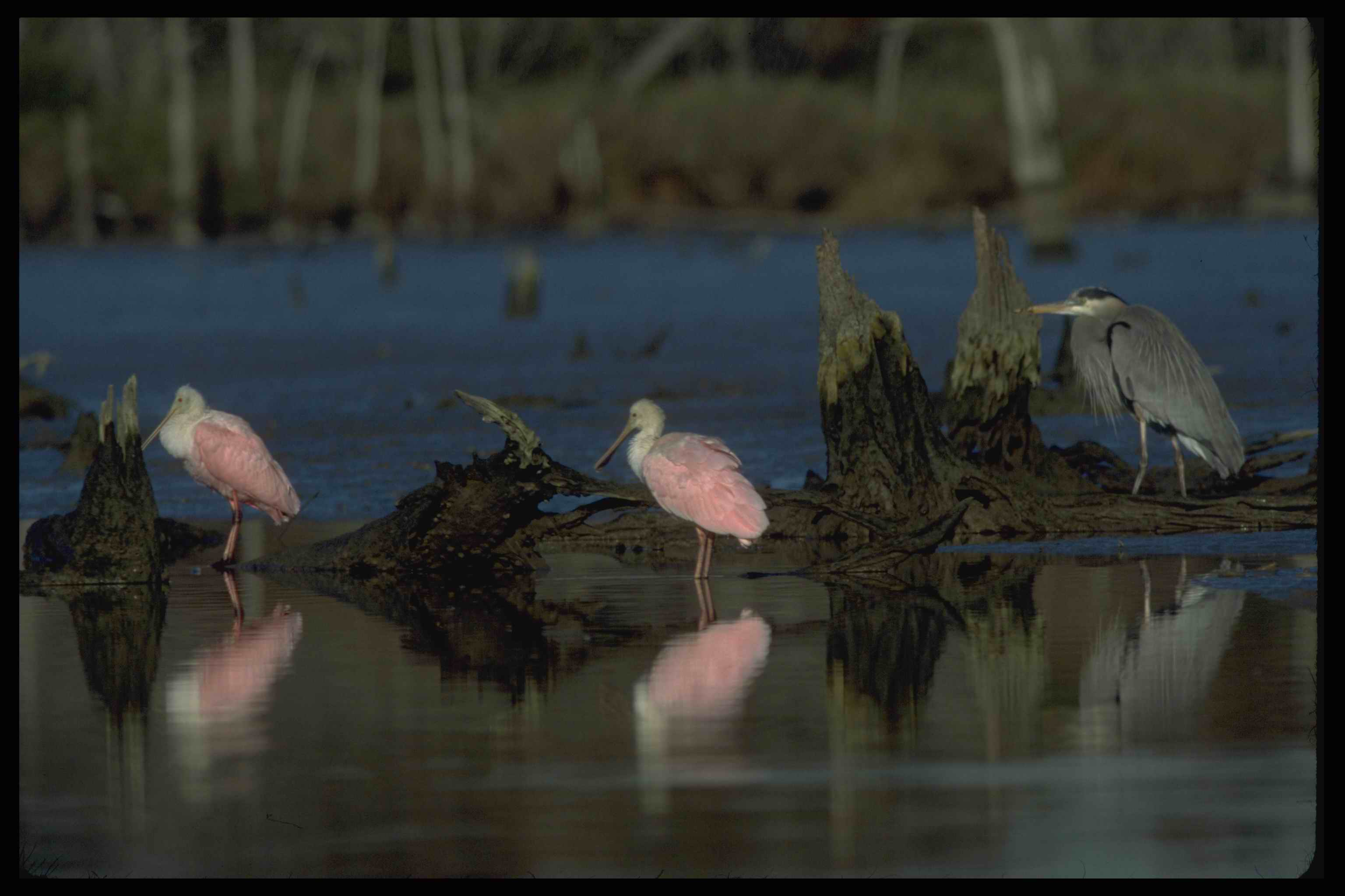 Executive Order Eo 11990 Protection Wetlands