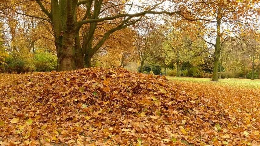 pile of leaves - 852×480