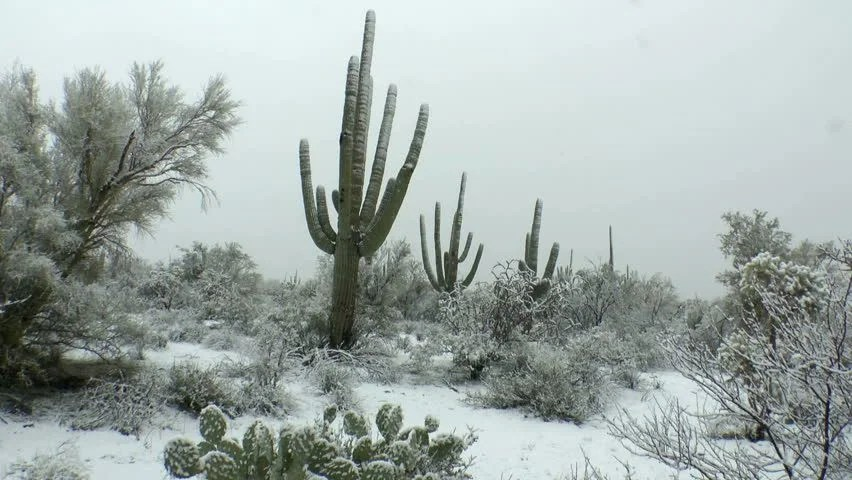 Thick Snowflakes Fall On Beautiful Stock Footage Video