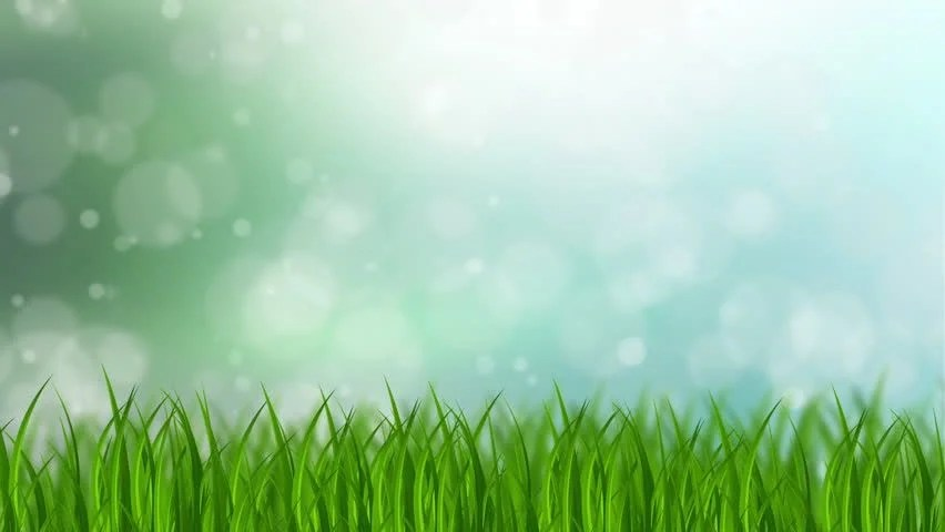 Grass Background Stock Footage Video 100 Royalty Free