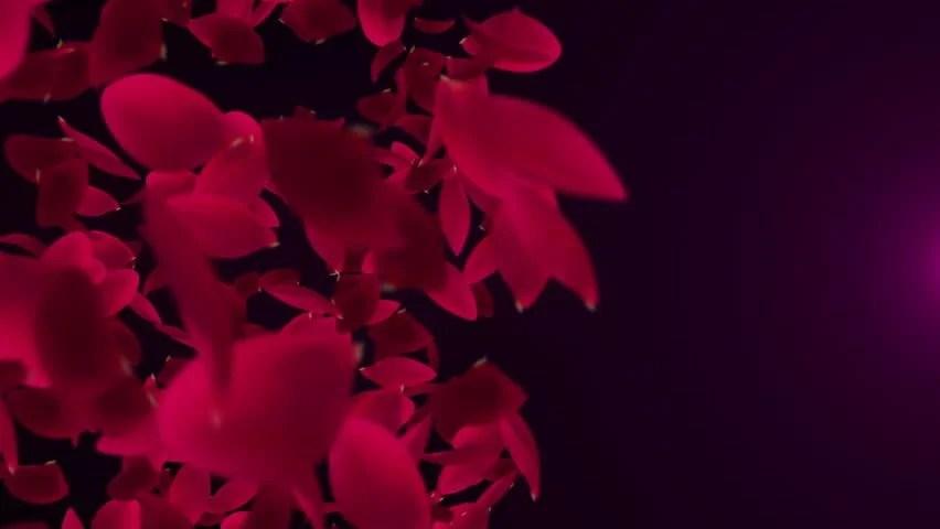 Rose petals falling in slow motion vídeos de archivo