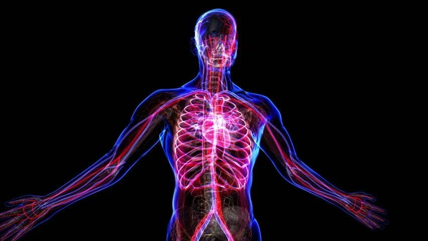 Human Cardiovascular System Stock Footage Video | Shutterstock