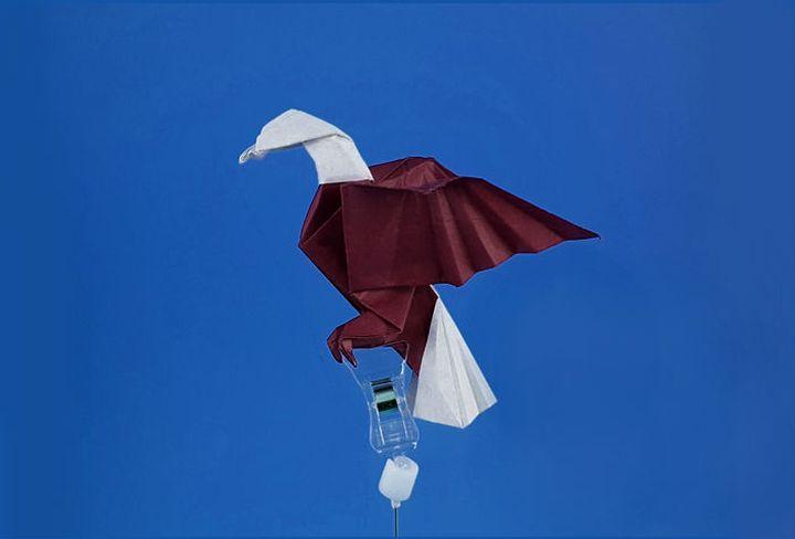کلاس کارشناسی ارشد در ساخت یک مدل پیچیده از اوریگامی عقاب