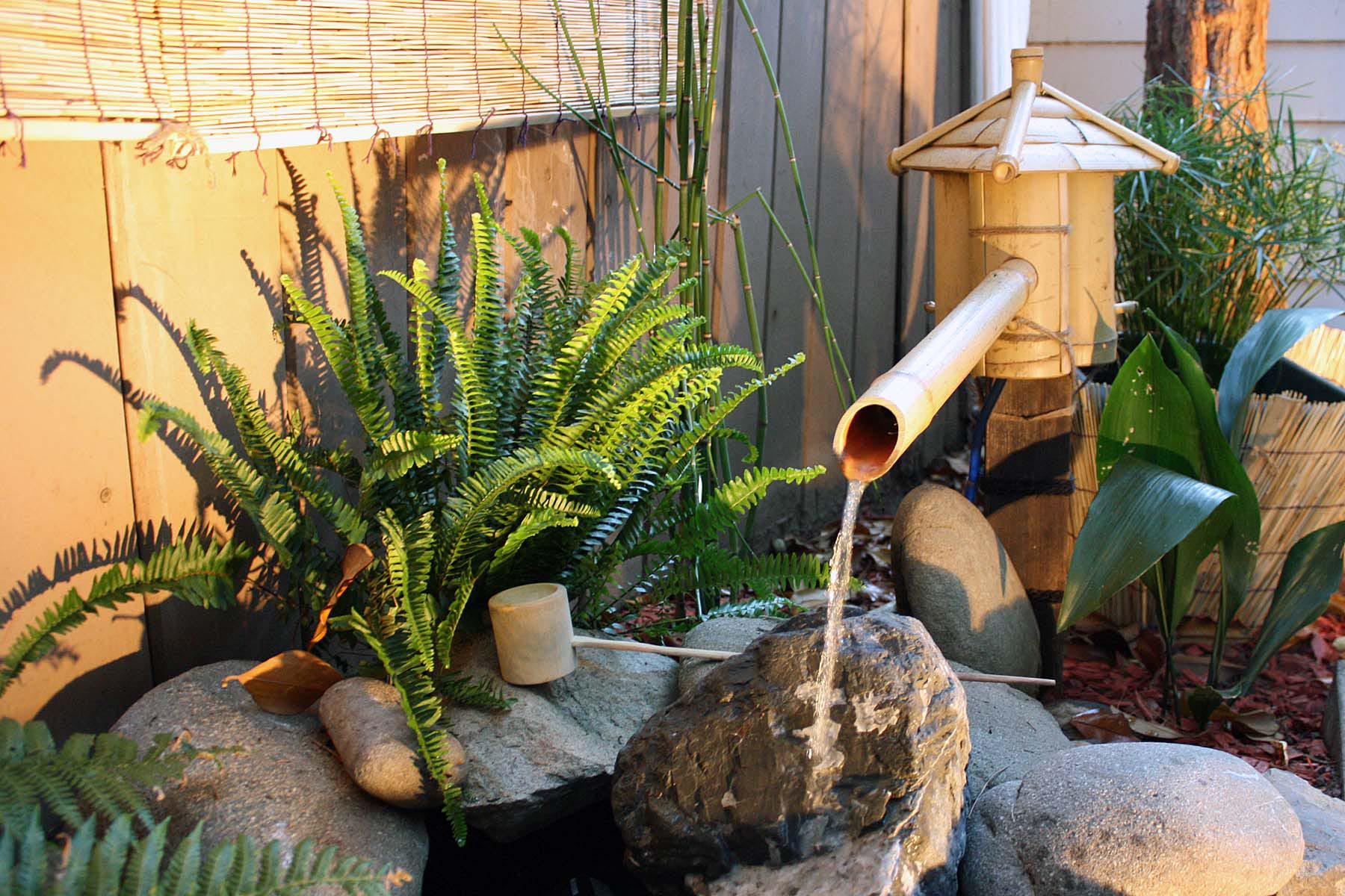 Water Feature Plants Around