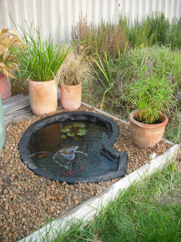 Small Garden Fish Pond Designs