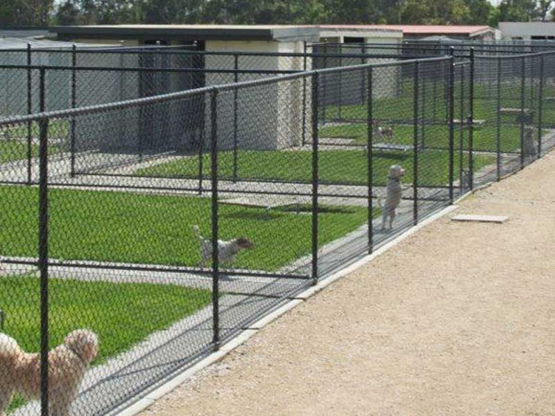 Pet Turf Always Green Synthetic Grass