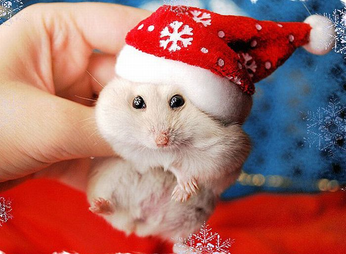 Beautiful Animals in Christmas Photography - 20 Photos of ...