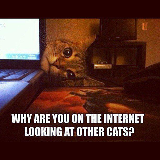 Cats Laugh Out Loud