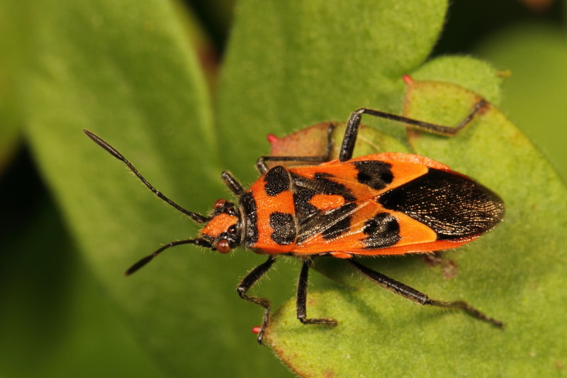 Red Bugs And Black Names