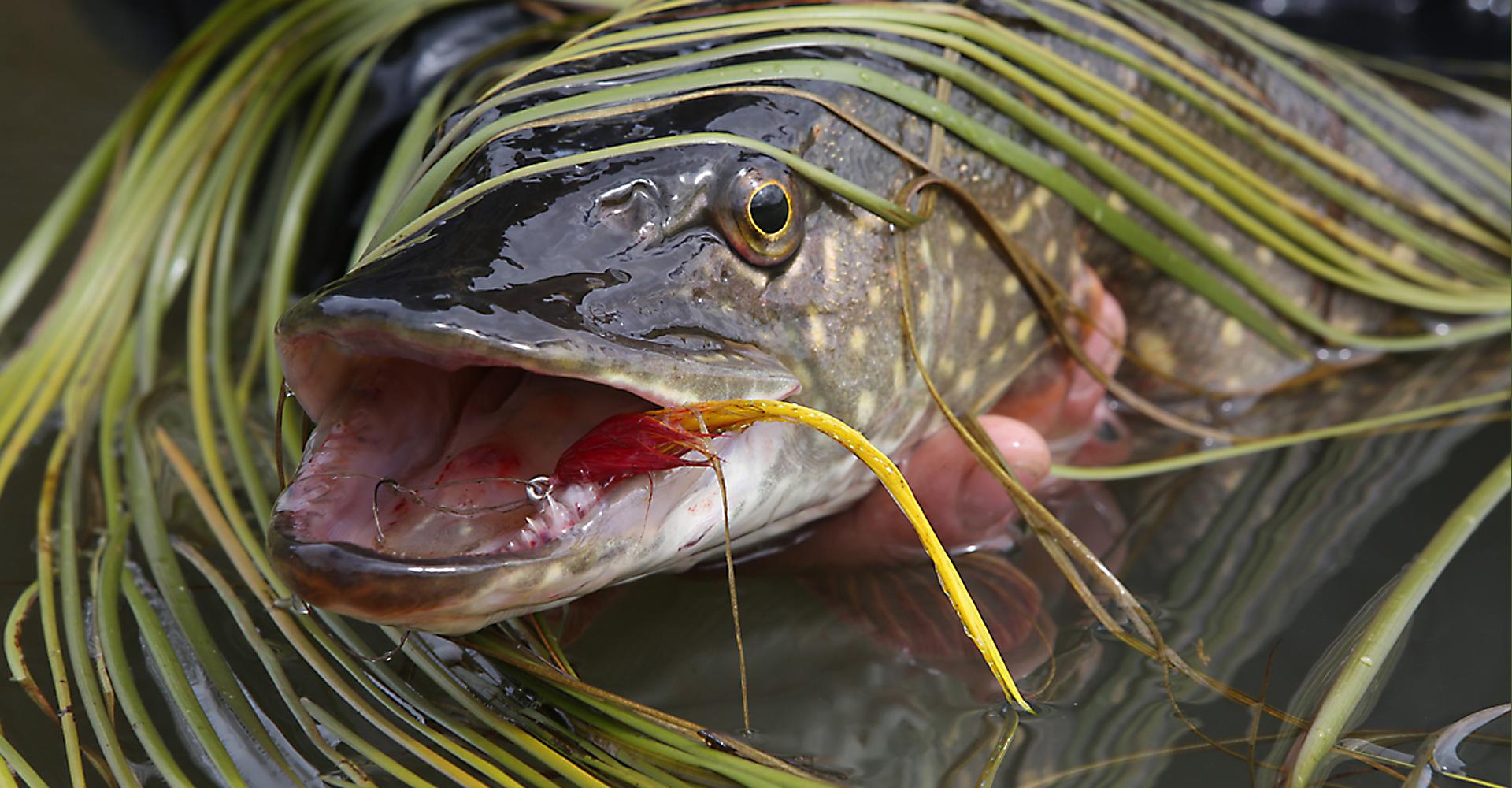 Aniak Alaska Lodge Fishing