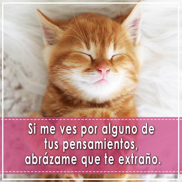Imagenes Tiernas De Animales De Gatos