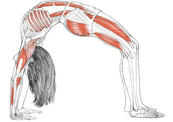 Ask Fit & Bendy: Stretching Wisdom from Kristina Nekyia ...