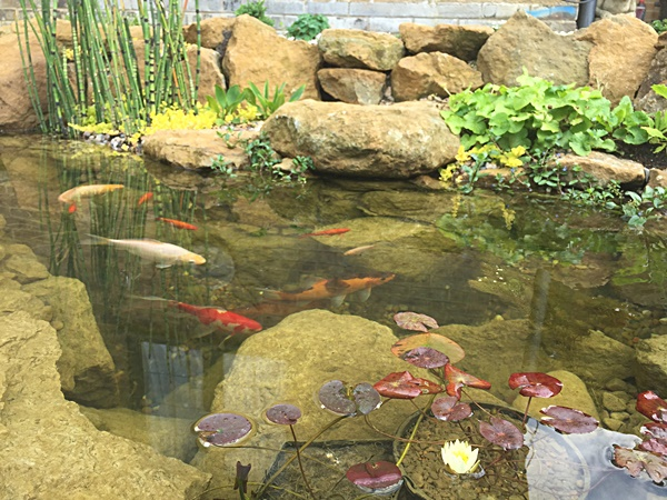 Building Natural Garden Pond