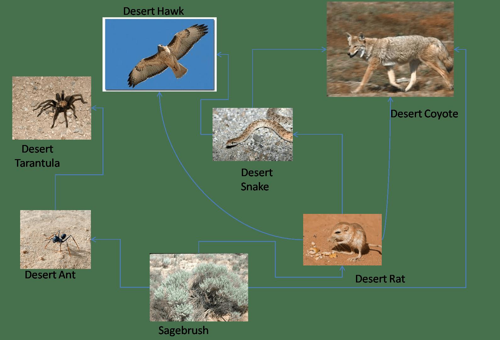 apassionforscience / 1E1_2012 Group 8 - Desert