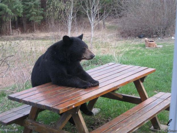 bear wrongs patiently pictures - 960×764