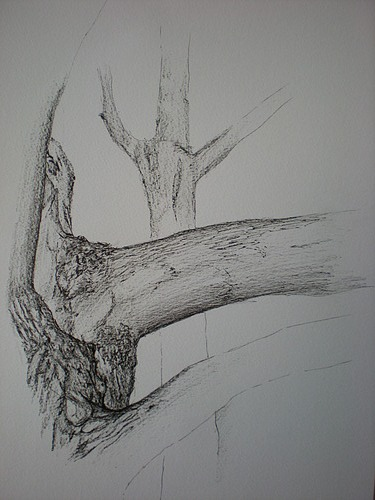 Pen And Paper Sketch Of A Tree Trunk By Grace Elwell 10