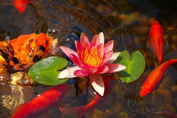 Fish Pond Accessories