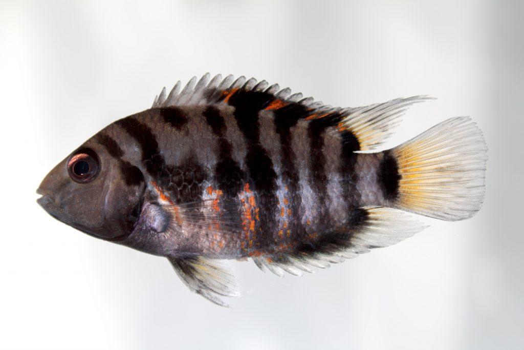 Fish Tank Plants Online