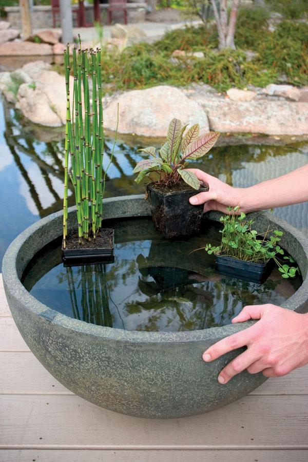 Fish Pond Installation