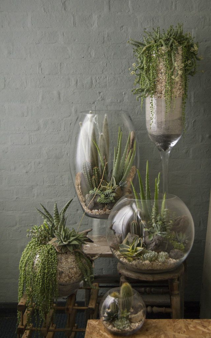 Tall Indoor Plants Low Maintenance