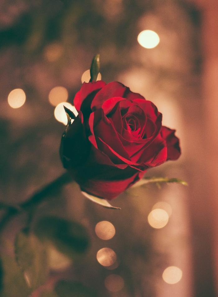 1001 + idées d'image romantique pour partager son amour