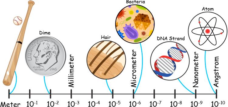 Bacterial Cell Diagram In Detail