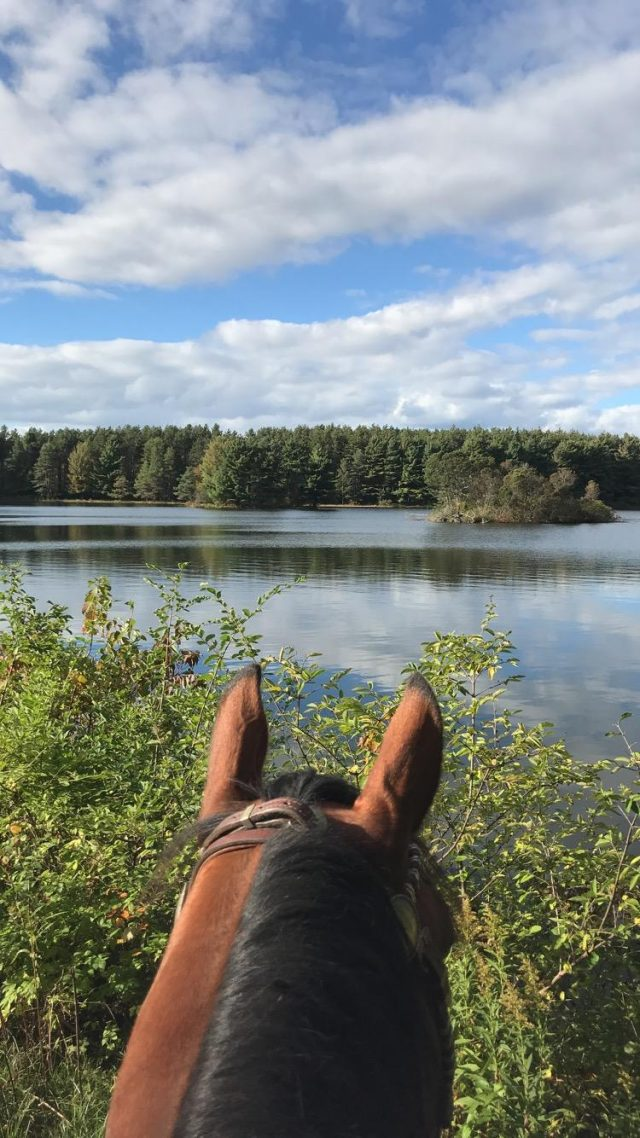 The Academic Equestrian The Barn Balance Horse Nation