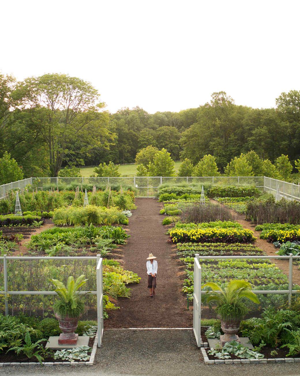 Vegetable Garden Care | Martha Stewart