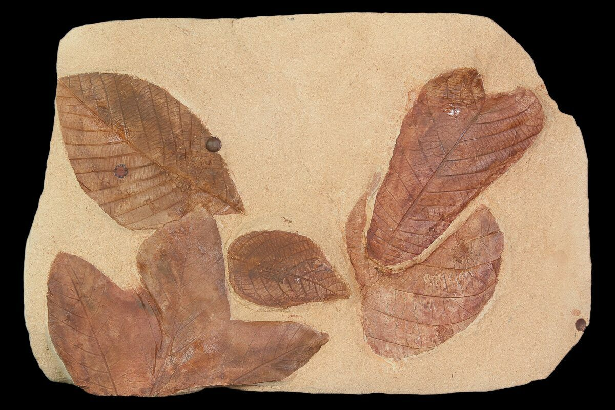 Rock Fossil Identification