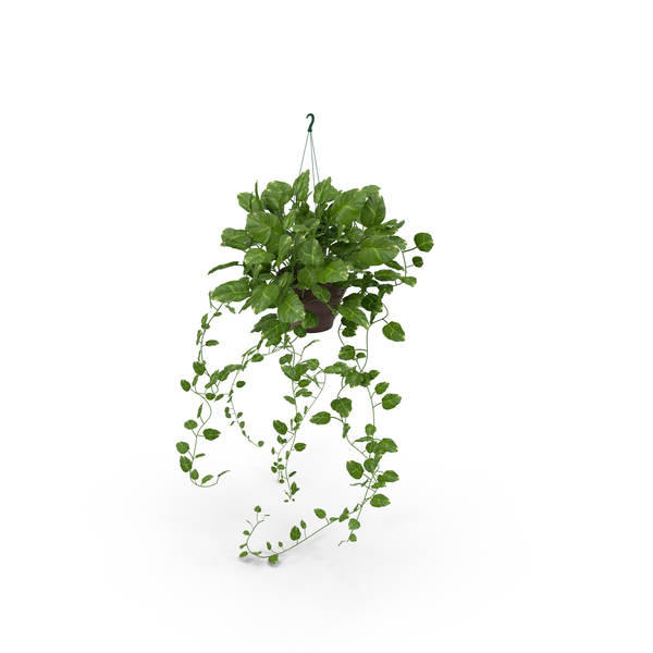 Hanging Indoor Plant Holder