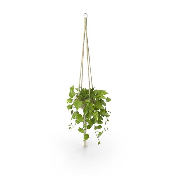 Decorative Hanging Flower Pots