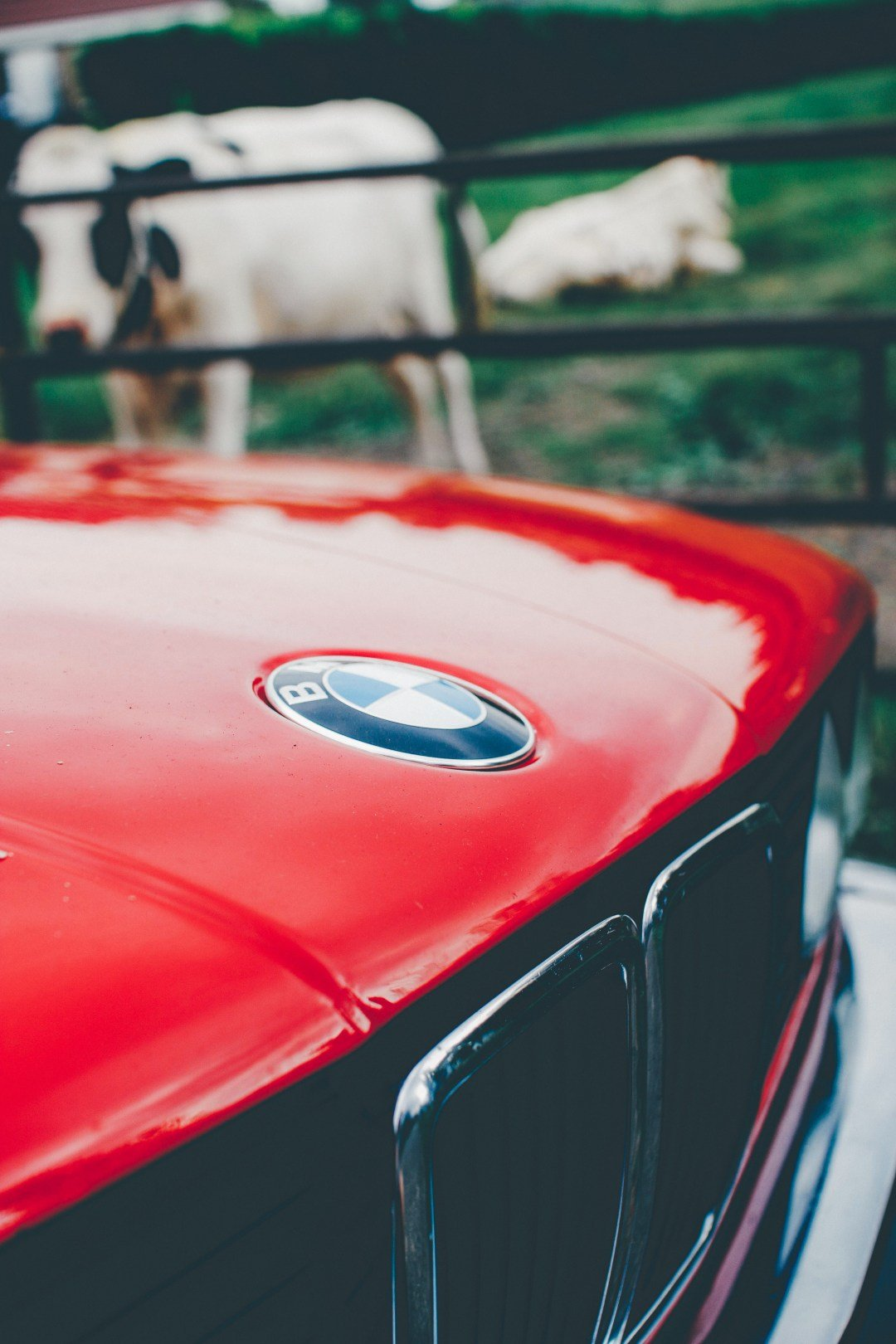 Latest Bmw Logo Pictures Download Free Images On Unsplash Free Download