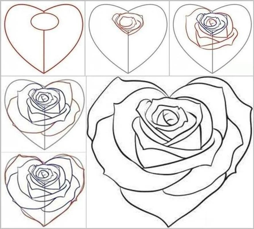 how to draw a rose - 736×665