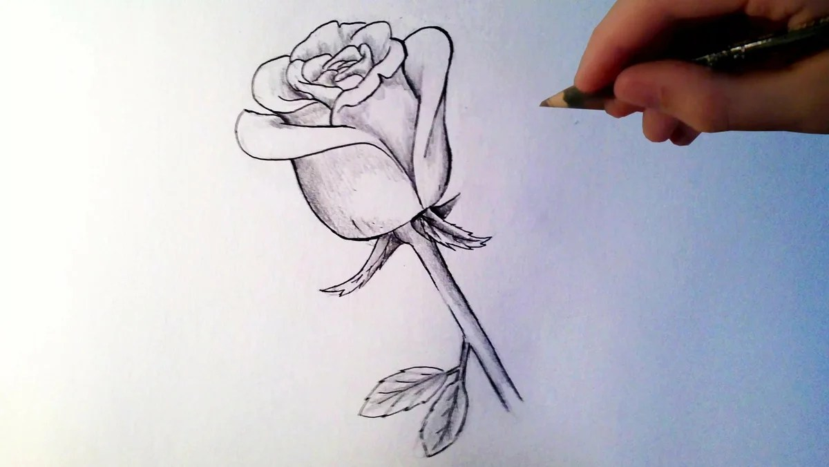 how to draw a rose - HD 2704×1519