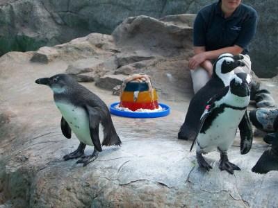 Mystic Aquarium's Penguin Party Goes Off Without a Hitch