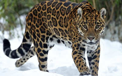 Animals Wallpaper Set 29 « Awesome Wallpapers
