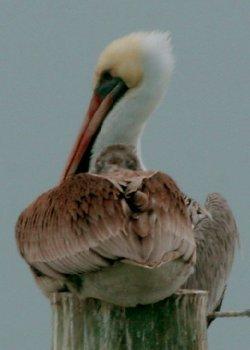 Slidell Louisiana Wild Bird Pictures Backyard Birds Of