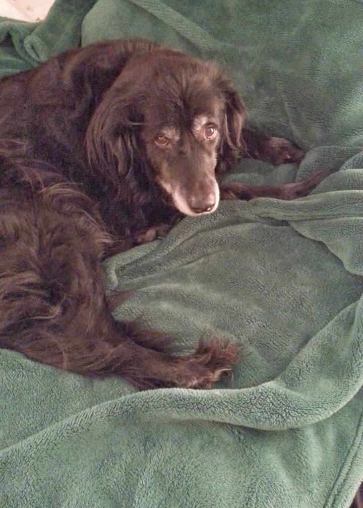 Bryon the Wonder Dog #DogRescue #ForeverHomes