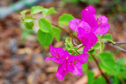 flower425.jpg
